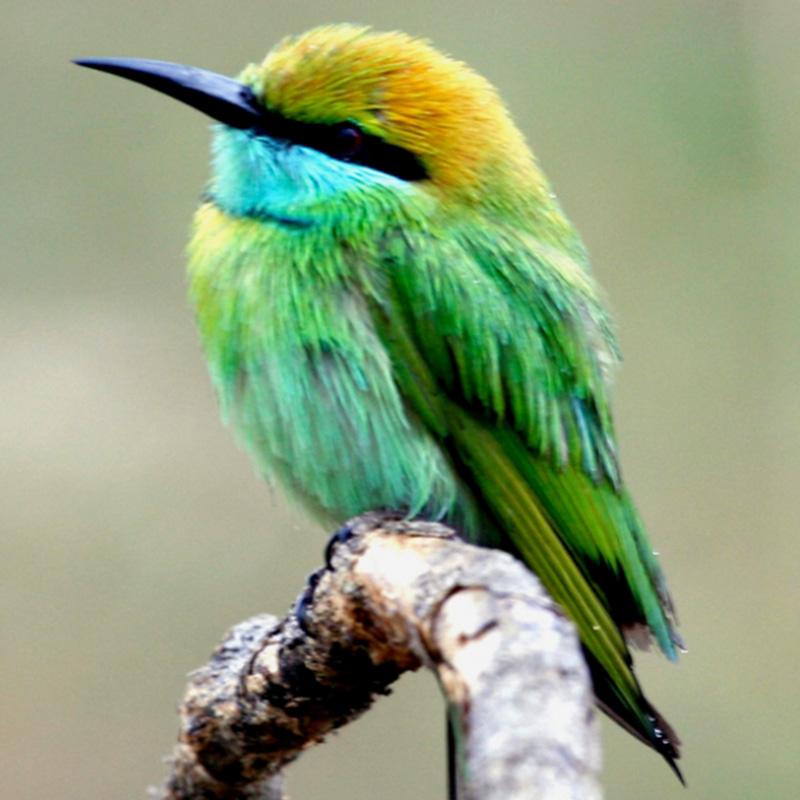 bird sanctuary in srilanka