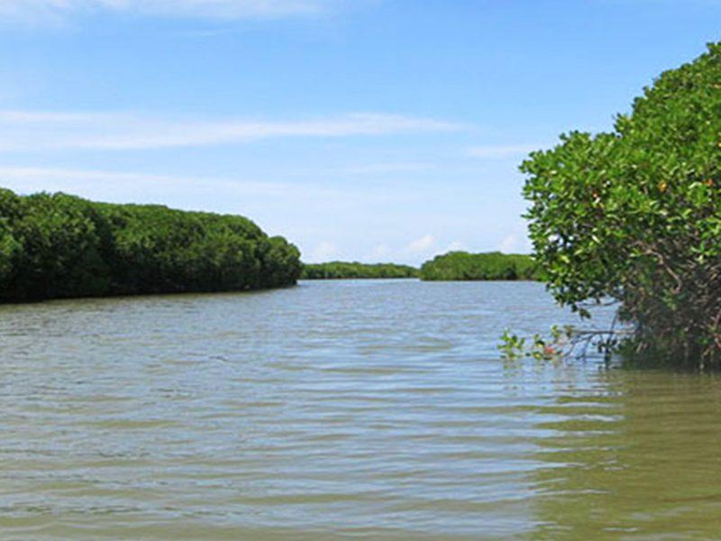 Negombo Lagoon srilanka