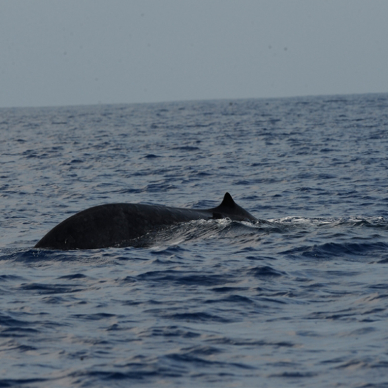 Whale watching in srilanka