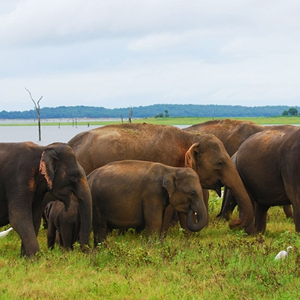 wild life in sri lanka